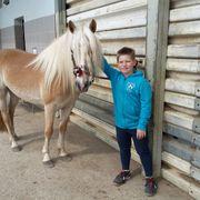 Haflinger Stute 6 Jahre alt