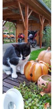 2 süße Katzenbabys abzugeben