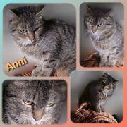 Wunderschöne Katze Anni 3 Jahre