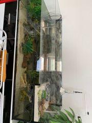 Aquarium mit Zubehör 2 Schildkröten