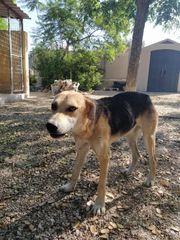 OSCAR - Lieber und menschenbezogener Schäferhund