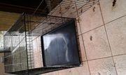 Hunde Metallkäfig klappbar in XXL
