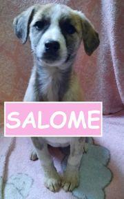die bezaubernde Salome sucht ein