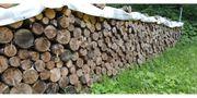 Brennholz 50 cm zugeschnitten