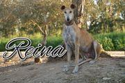 Reina möchte ein unbeschwertes Hundeleben