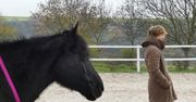Persönliche Standortbestimmung - Coaching mit Pferden