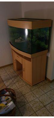 Terrarium oder Aquarium