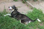 Luna 7 Monate kastriert