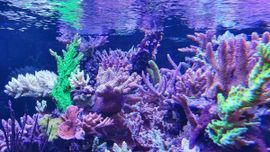 Meerwasser korallen: Kleinanzeigen aus Ötzingen Sainerholz - Rubrik Fische, Aquaristik