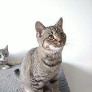 BKH Kitten in guten Händen