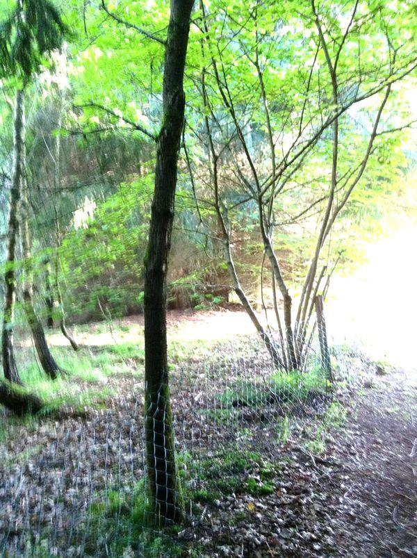 Freizeitgrundstück im Westerwald mit Bachlauf