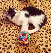 Kätzchen Bibiana sucht ihre Dosis