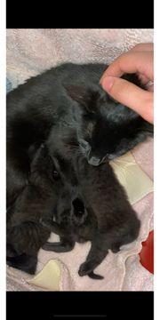 3 Kitten abzugeben