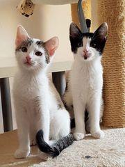 Easy und Emma - Katzen aus