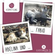 Verspielte Kätzchen Abelina und Fabio
