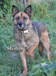 Mulya sucht endlich ein Zuhause