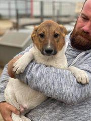 Edgar - freundlicher Junghund