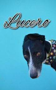 Schenken Sie Lucero eine bessere