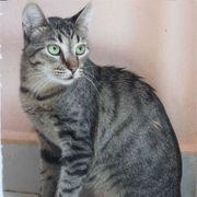 Katzenjunge Amando sucht seine geliebten