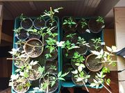 Bio Jungpflanzen