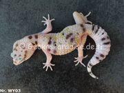 Leopardgecko 2018 nur noch 4
