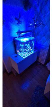 Nano Meerwasser Aquarium 55Liter inkl