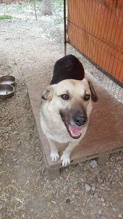 Nora - ruhige Hundedame sucht dringend