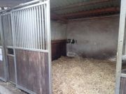 Stellplatz für leichtfutteriges stoffwechselerkranktes Pferd