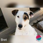Bret - Der etwas andere Hingucker