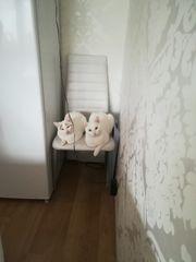 2 Katzen suchen ein liebevolles