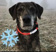 Biete Gassigehen Hundesitten Urlaubsbetreuung