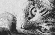 Vorlage für Ministeck Cat6 80x60cm