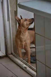 Herzenshund Delton