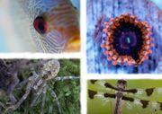 Privater Tierversand - Fische und Wirbellose -