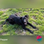 Pepper - Kaum zu bremsen