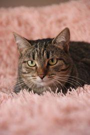Katze 2Jahre