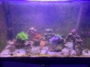 Meerwasseraquarium 270 liter