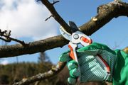 Baumschnitt - Kronenreduzierung - Baumfällarbeiten