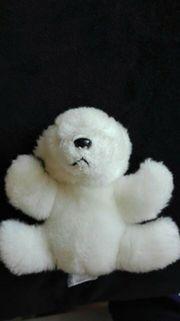 Kleiner Eisbär Teddy -weiß - Gebraucht