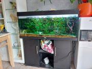 Jewel Aquarium wegen Krankheit