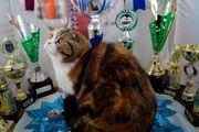 Gr Int Champion Glückskatze 3