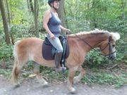 Reitbeteiligung an Geländepferd anzubieten