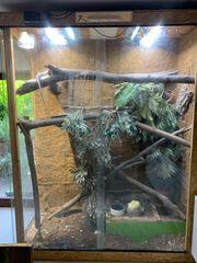 Terrarium mit 1 1 Iguana