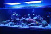 Meerwasser Red Sea Reefer 525