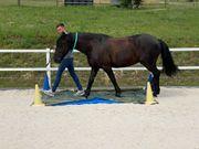 Online Supervision - Pferdegestütztes Coaching