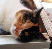 Katzenmädchen Jule schmust gern