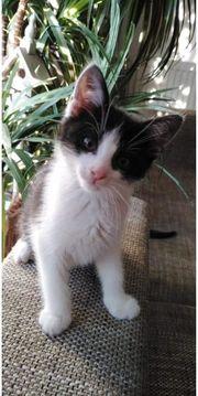 Katzen Kitten Mieze