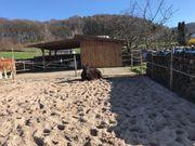 Offenstall Offenstallplatz für leichtfuttriges Pony