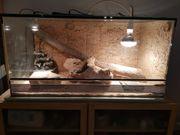 Terrarium 100x50x50cm komplett mit Zubehör