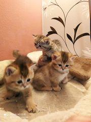 Katzennachwuchs sucht neues Zuhause